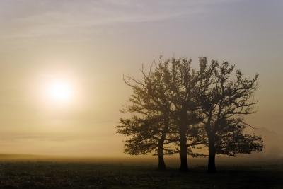Dawn by Dan