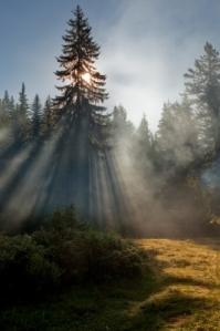 Pine Sun Evgeni Dinev