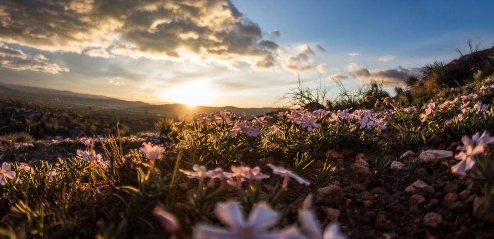 Pink Flowers Sky u