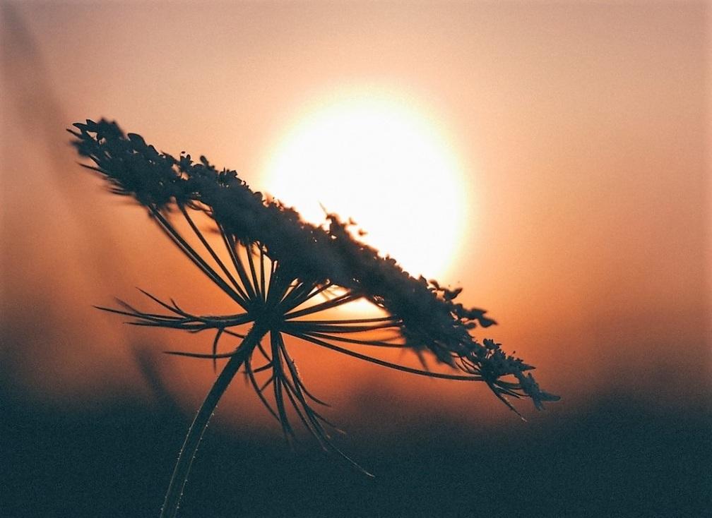 Flower sun (2)