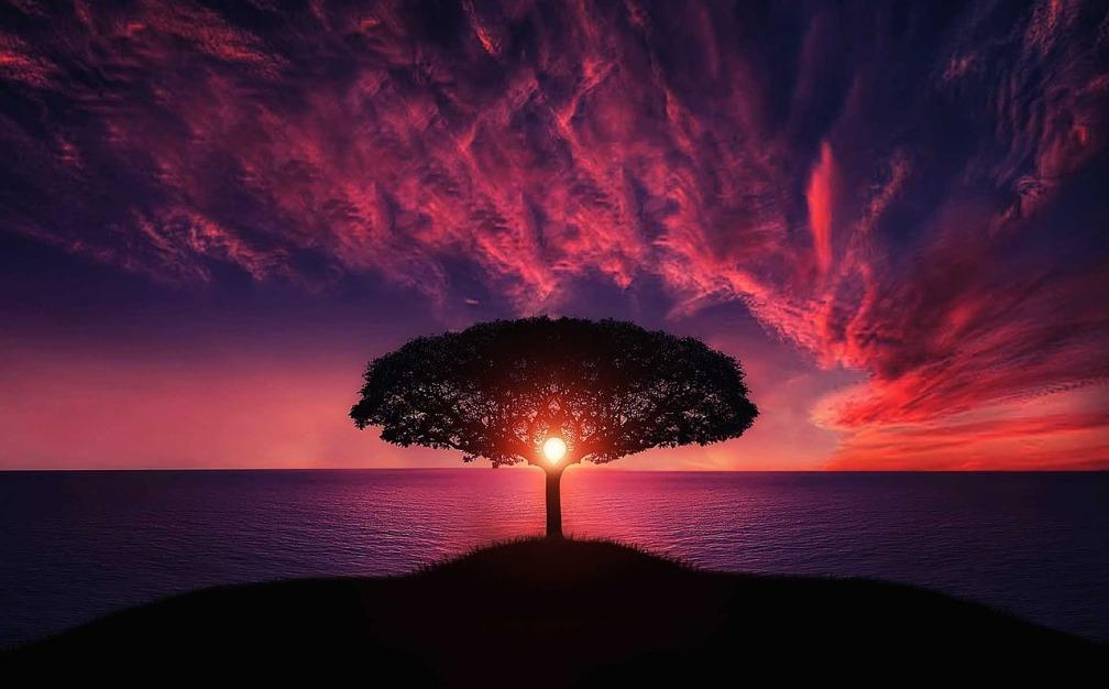 violet-tree