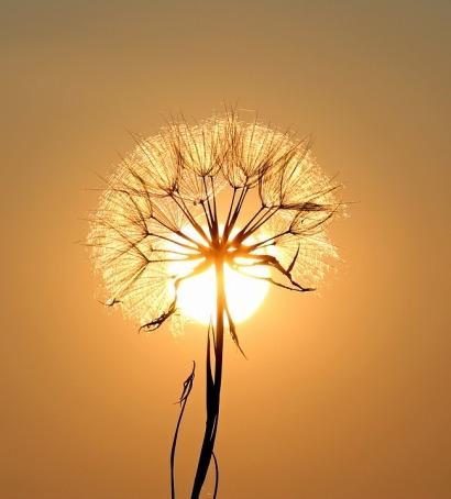 sun wish
